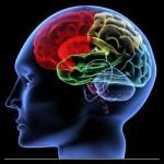 脳科学と心理学の観点から見る、FX常勝トレードの築き方